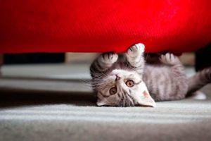 Котенок под диваном