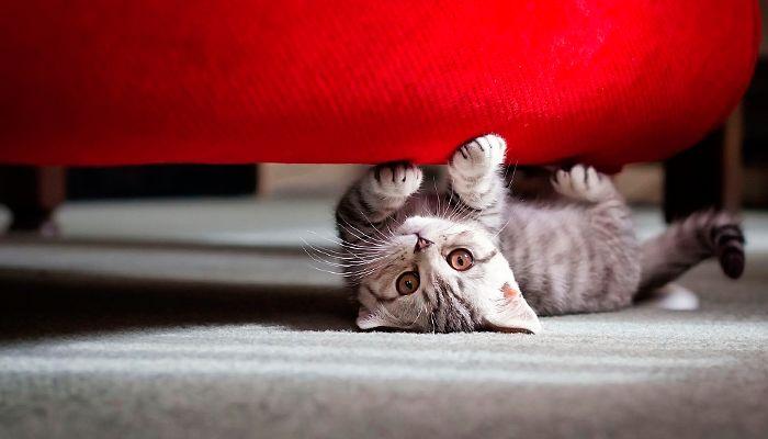 Как отучить кошку драть обои и мебель? Советы и рекомендации экспертов