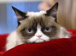 Как вычесать блох у кошки