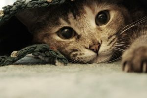 Хитрый котенок