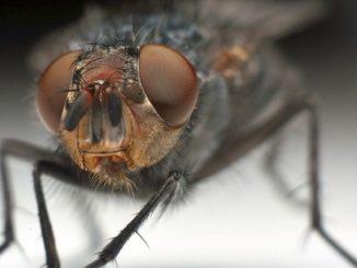 Мелкая муха