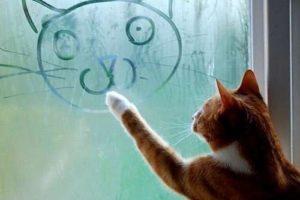 Кот и окно