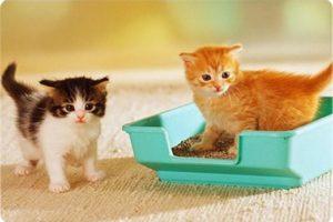 Котята и лоток