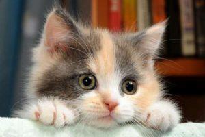 Котенок и лапки