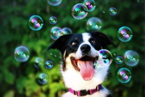 Собака и пузыри