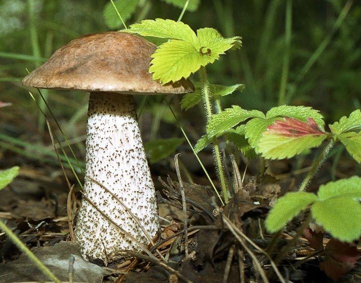 Как хранить свежие грибы в домашних условиях в квартире