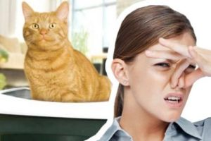 Кошачий запах