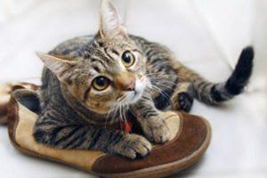 Кошачий запах в обуви