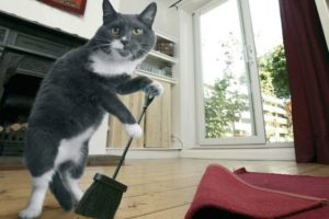 Кошачий запах на полу