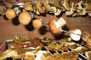 Готовые сушеные грибы