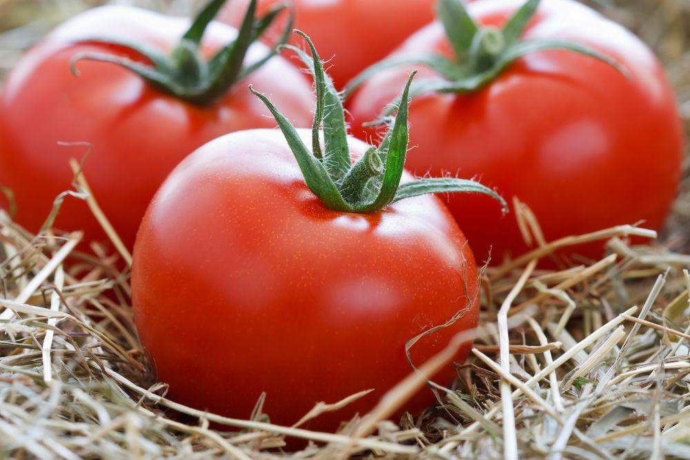 Как сохранить томаты свежими надолго