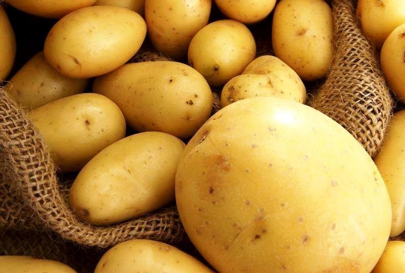 Как правильно выбрать картофель для хранения на зиму и осуществить его подготовку: как просушить, чем обработать ипересыпать перед закладкой