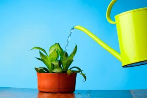 Полив комнатного растения