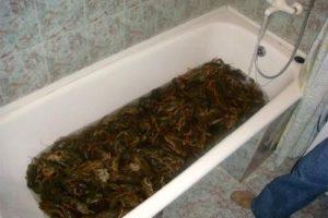 Раки в ванной