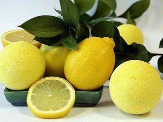 Лимоны с ветками
